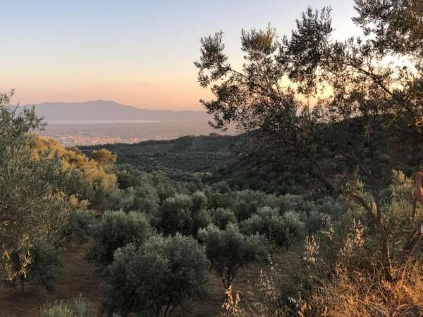 Reise zur Olivenölproduktion der Familie Christakis nach Griechenland